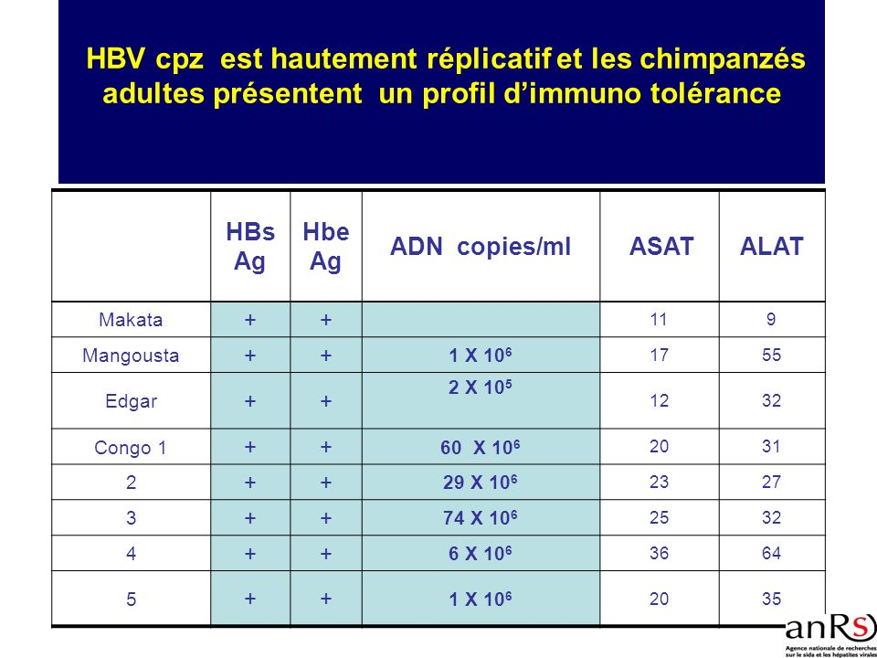 HBV cpz est hautement réplicatif et les chimpanzés adultes présentent un profil d'immuno tolérance