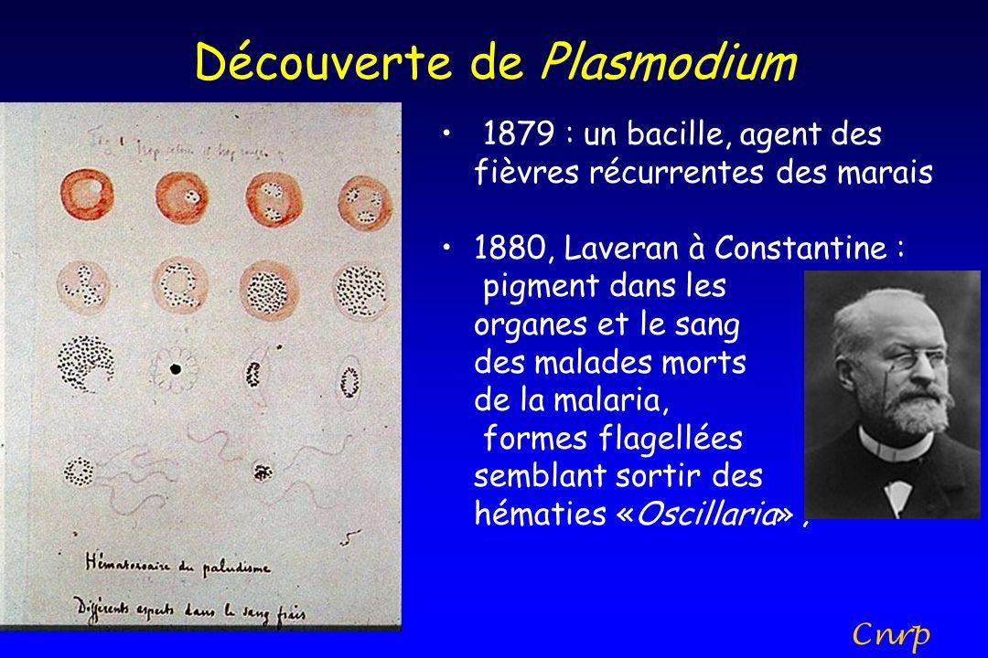 Découverte de Plasmodium