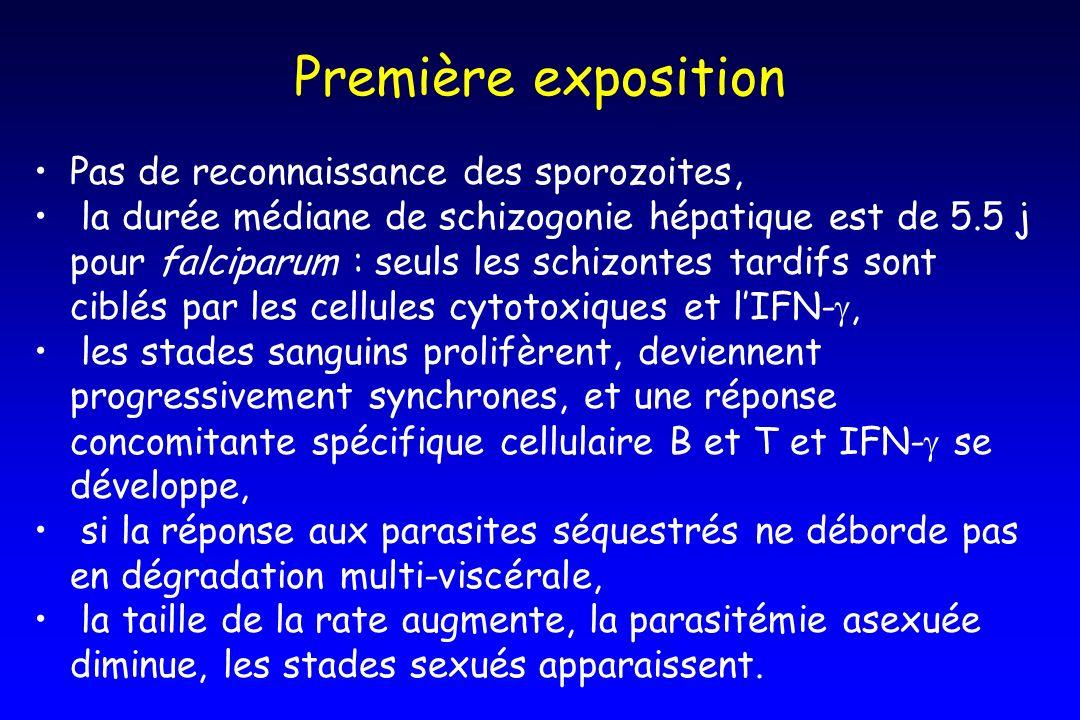 Première exposition Pas de reconnaissance des sporozoites,