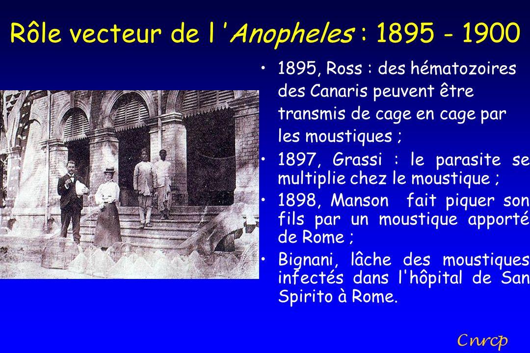 Rôle vecteur de l 'Anopheles : 1895 - 1900