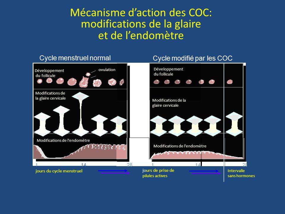 Mécanisme d'action des COC: modifications de la glaire et de l'endomètre
