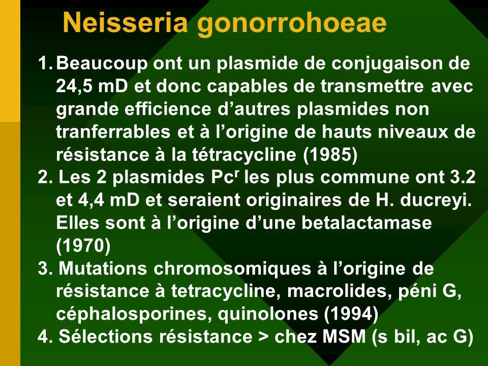 Neisseria gonorrohoeae