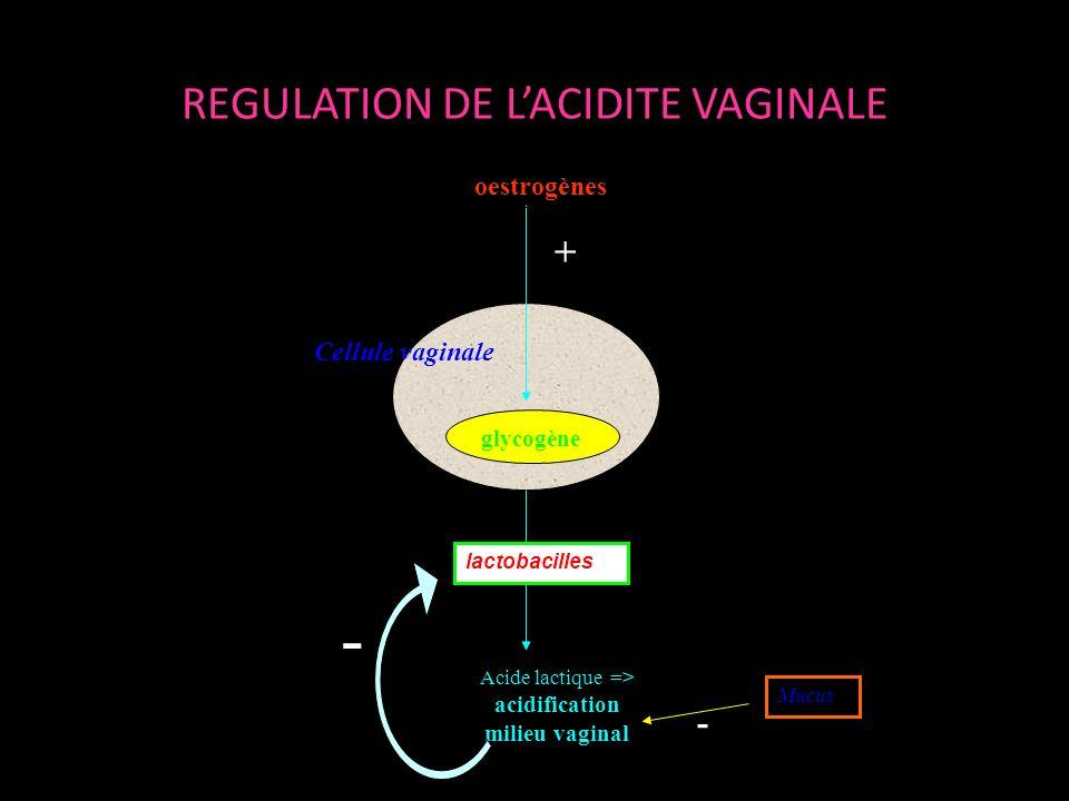 REGULATION DE L'ACIDITE VAGINALE