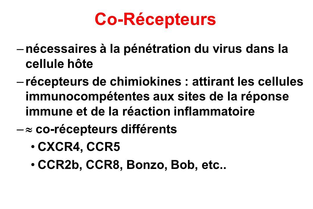 Co-Récepteurs nécessaires à la pénétration du virus dans la cellule hôte.