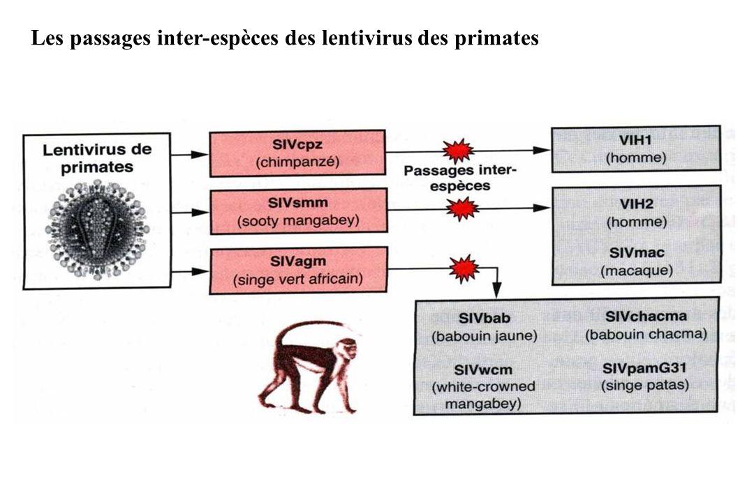 Les passages inter-espèces des lentivirus des primates