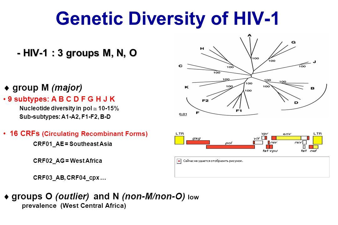 Genetic Diversity of HIV-1