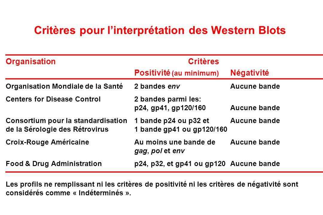 Critères pour l'interprétation des Western Blots
