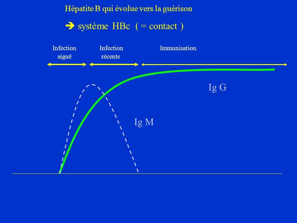 Hépatite B qui évolue vers la guérison  système HBc ( = contact )