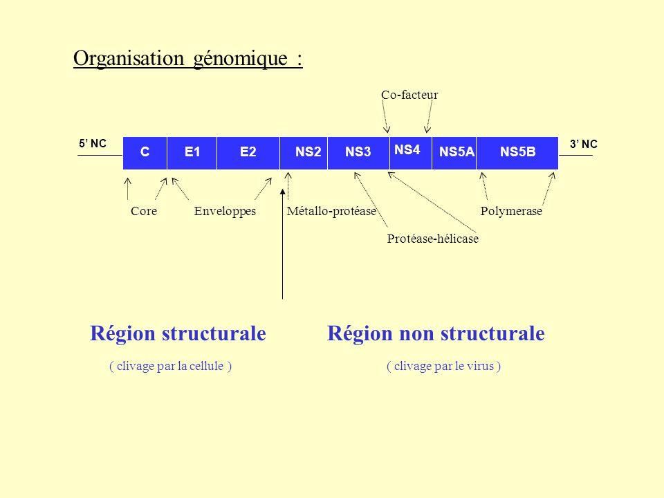 Organisation génomique :
