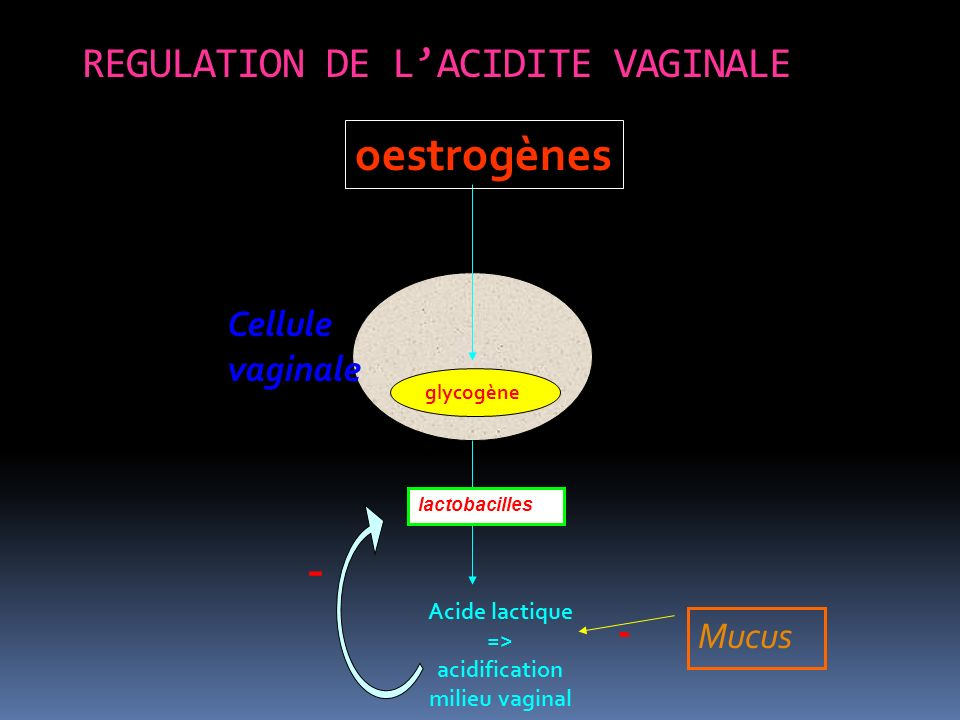 REGULATION DE L'ACIDITE VAGINALE