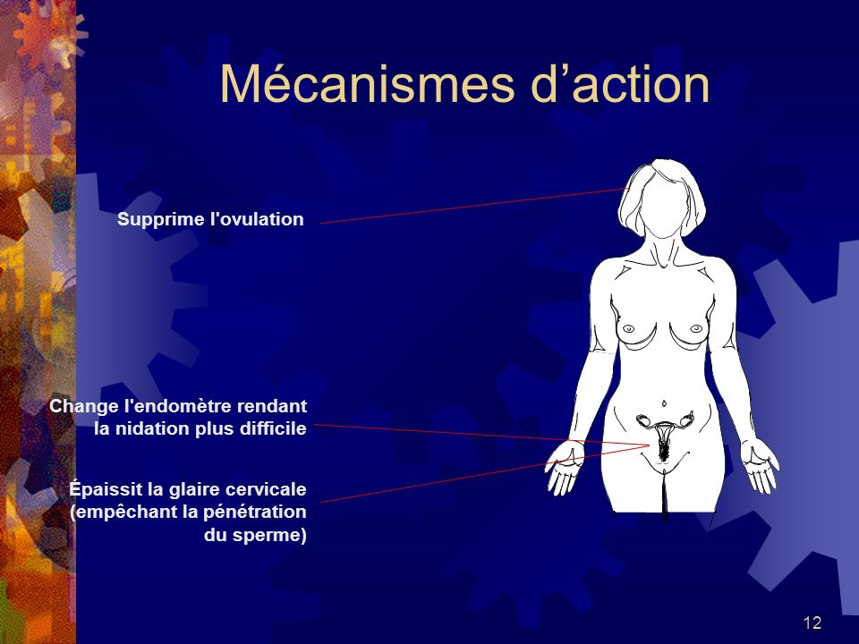 Mécanismes d'action Supprime l ovulation