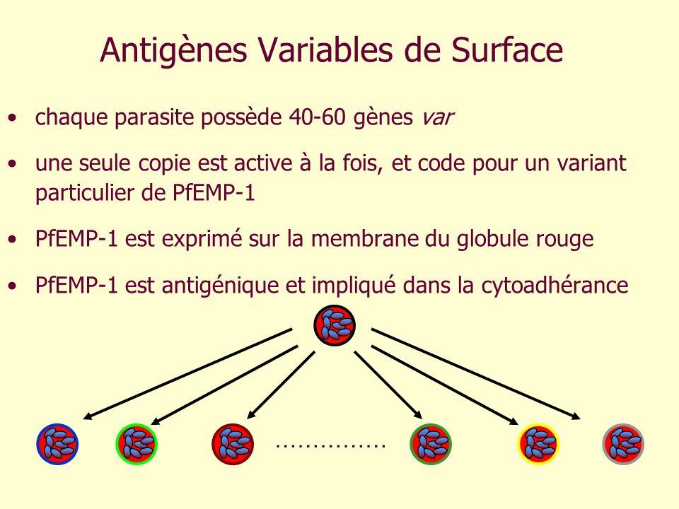 Antigènes Variables de Surface