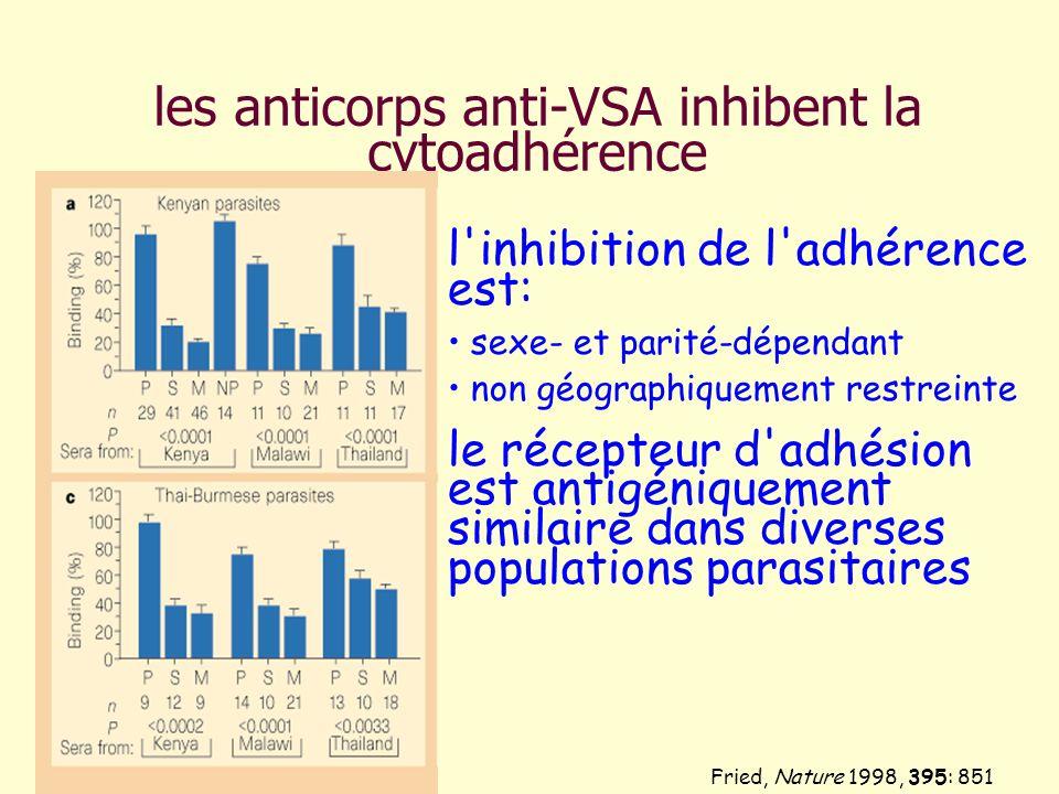 les anticorps anti-VSA inhibent la cytoadhérence