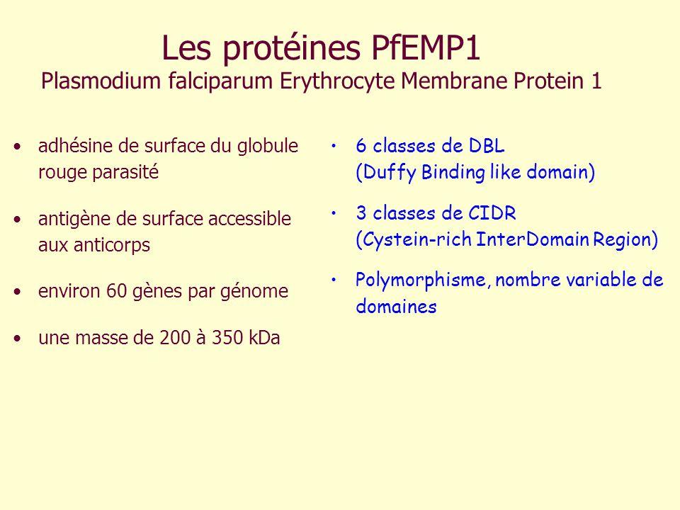 Les protéines PfEMP1 Plasmodium falciparum Erythrocyte Membrane Protein 1