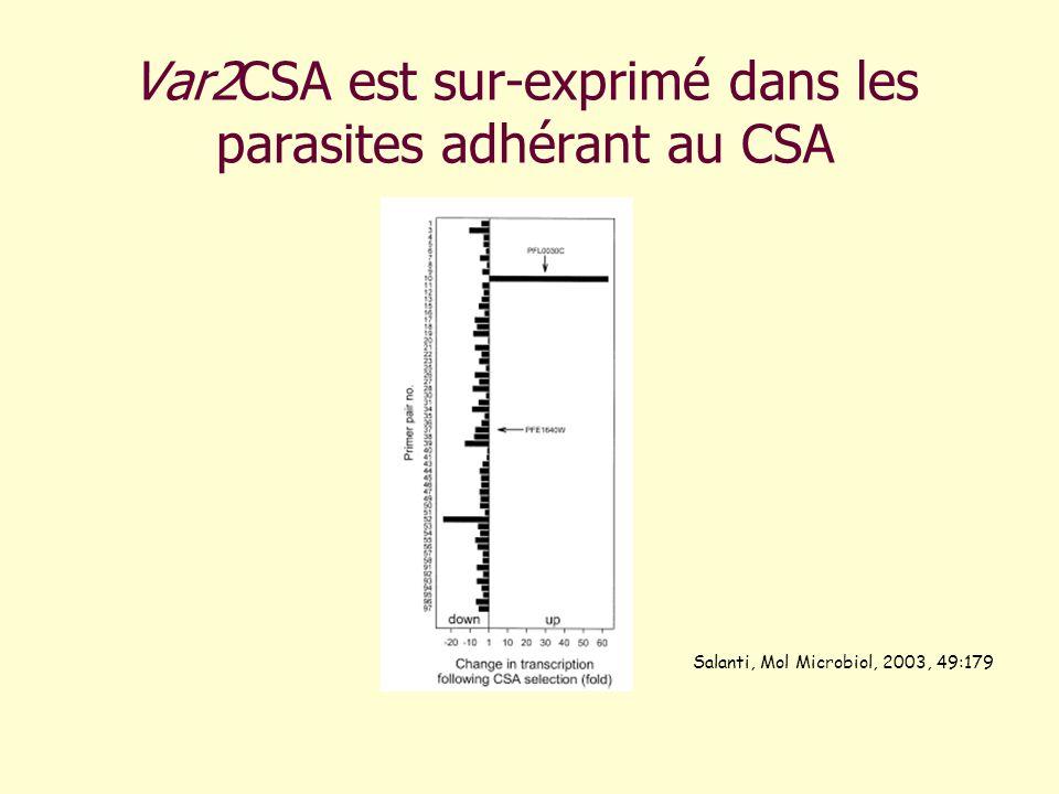 Var2CSA est sur-exprimé dans les parasites adhérant au CSA