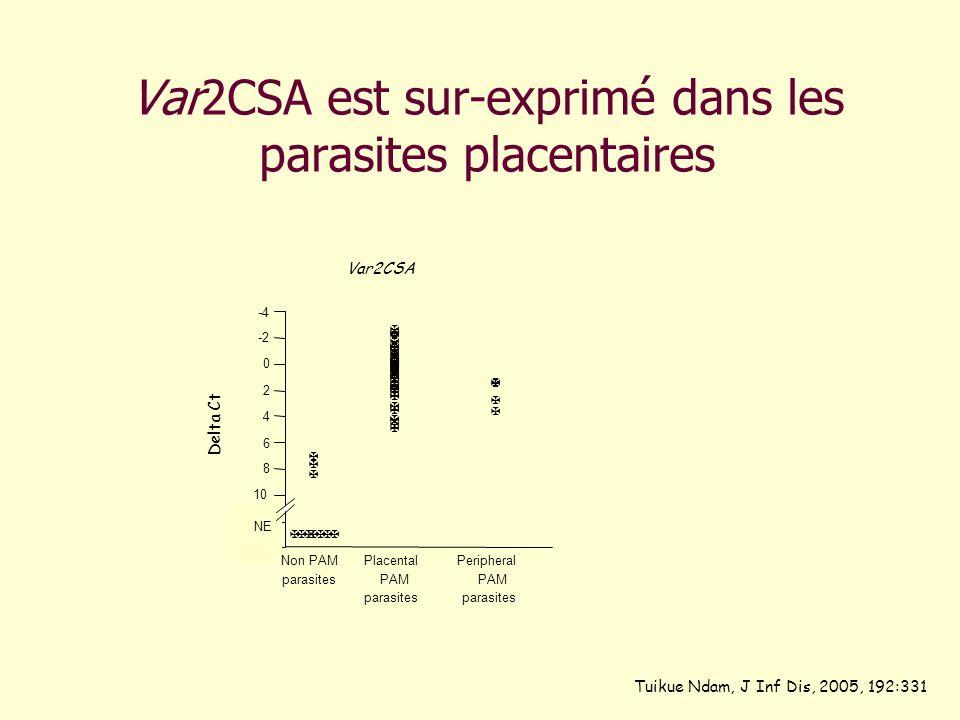 Var2CSA est sur-exprimé dans les parasites placentaires