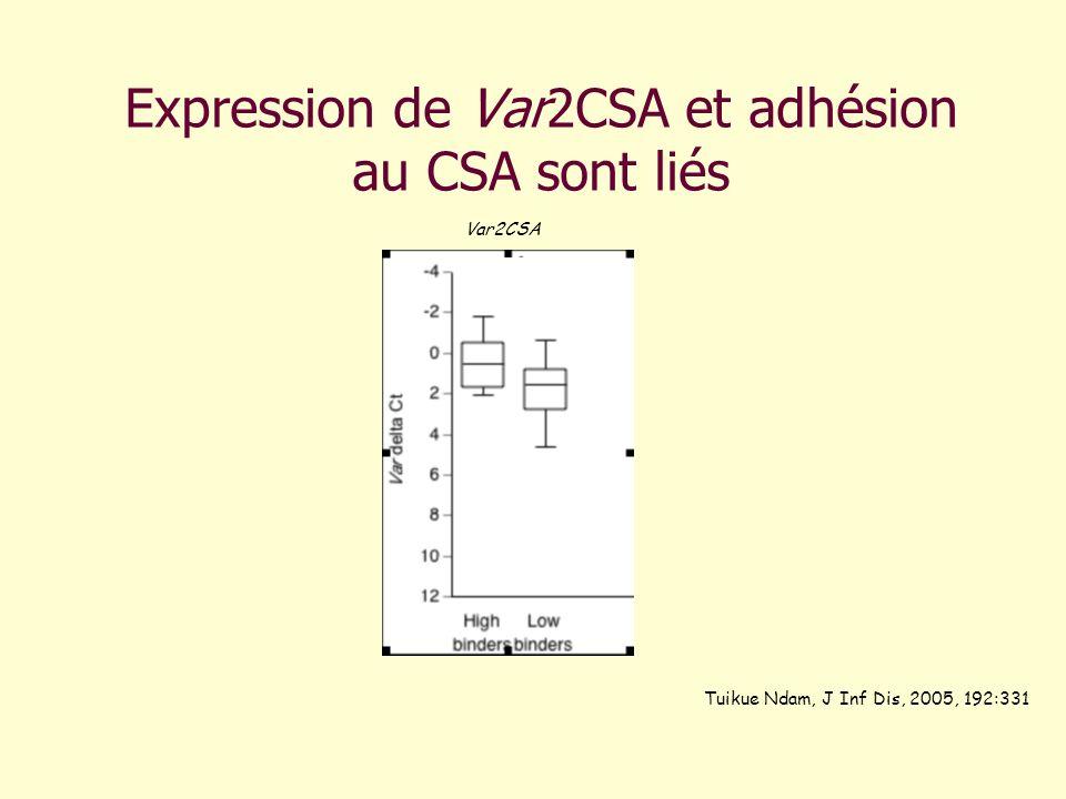 Expression de Var2CSA et adhésion au CSA sont liés