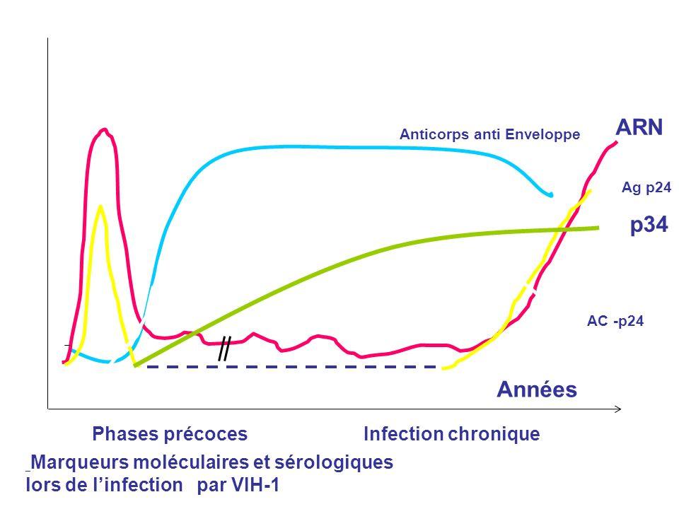 ARN p34 Années Phases précoces Infection chronique