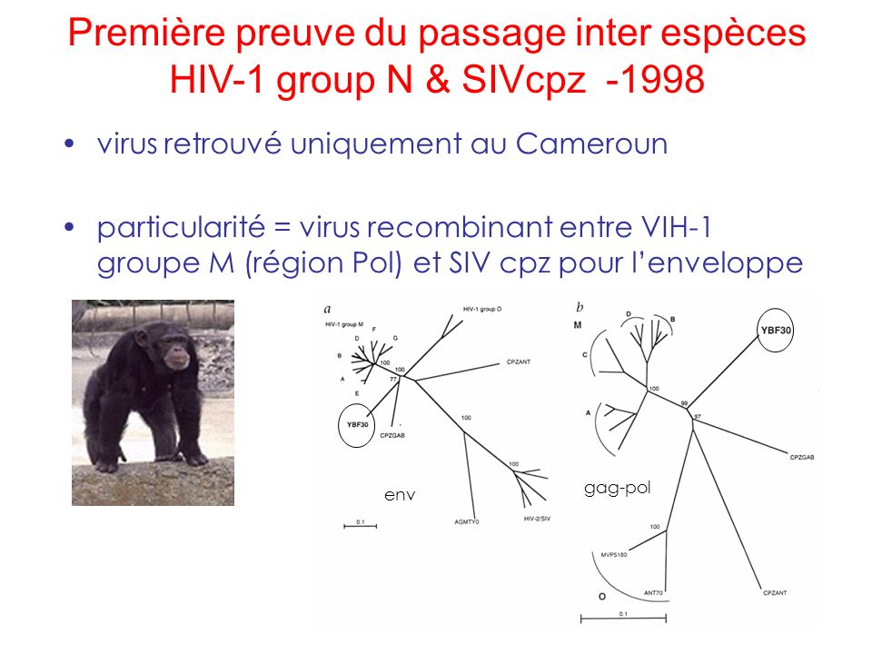 Première preuve du passage inter espèces HIV-1 group N & SIVcpz -1998