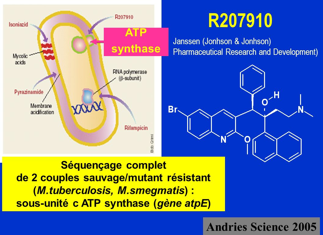 R Andries Science 2005 ATP synthase Séquençage complet