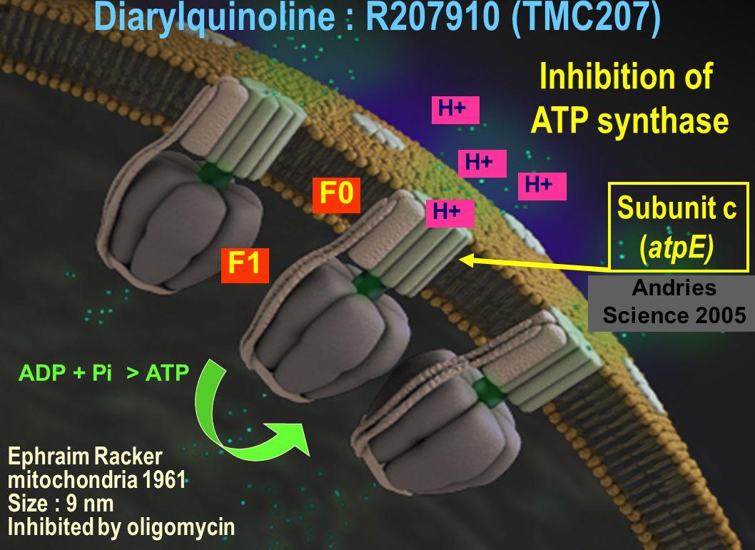 Diarylquinoline : R207910 (TMC207)