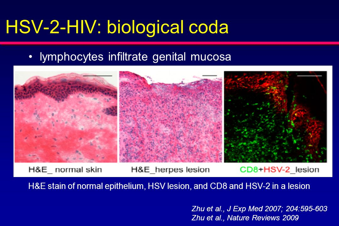HSV-2-HIV: biological coda