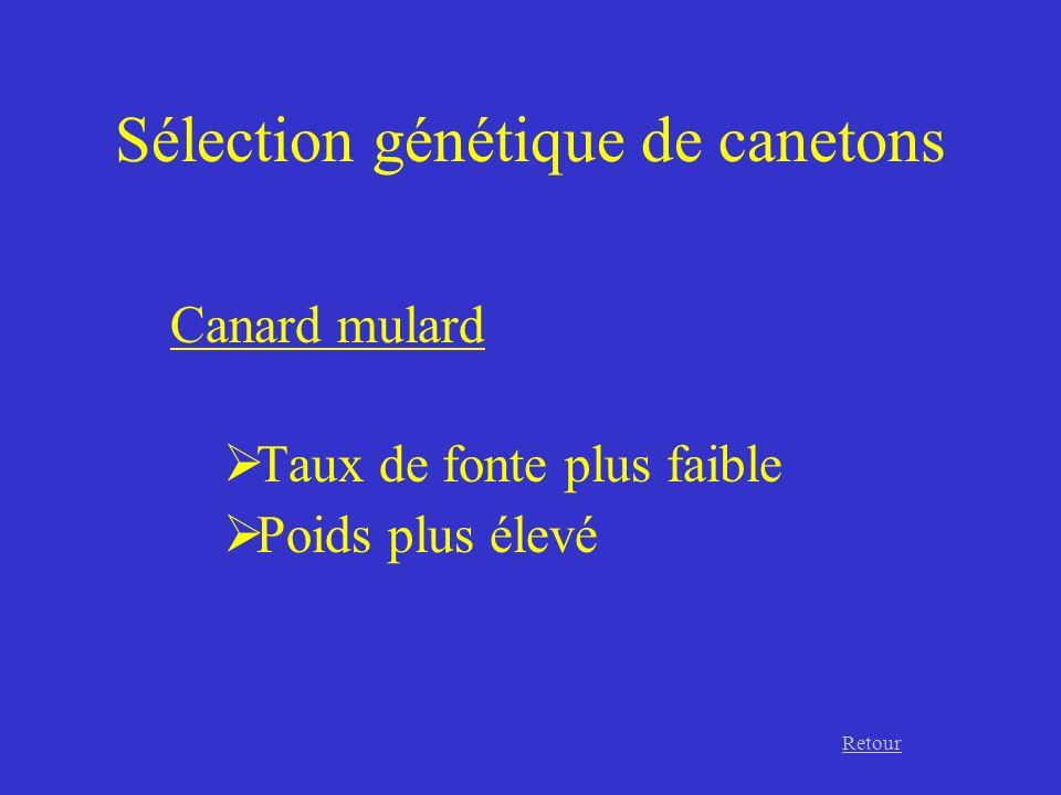 Sélection génétique de canetons