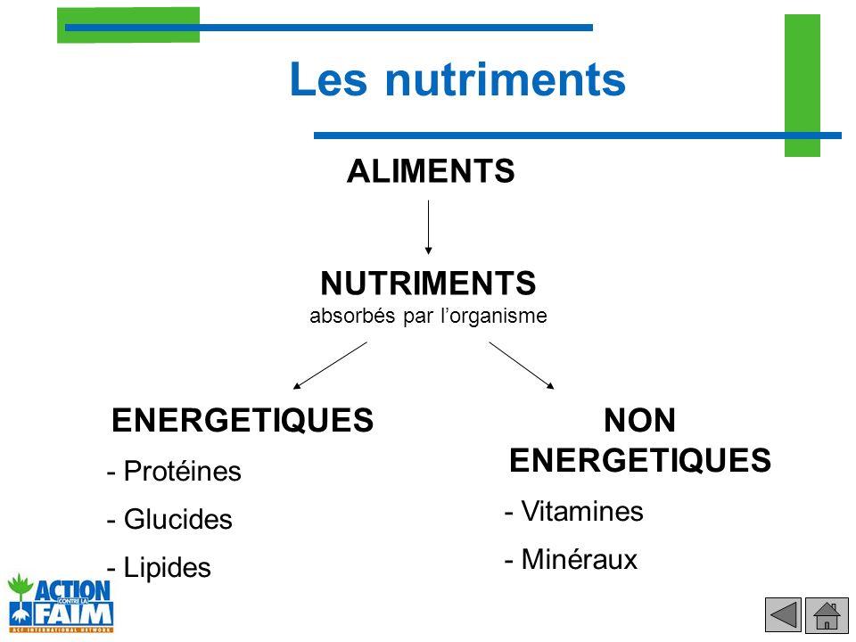 NUTRIMENTS absorbés par l'organisme