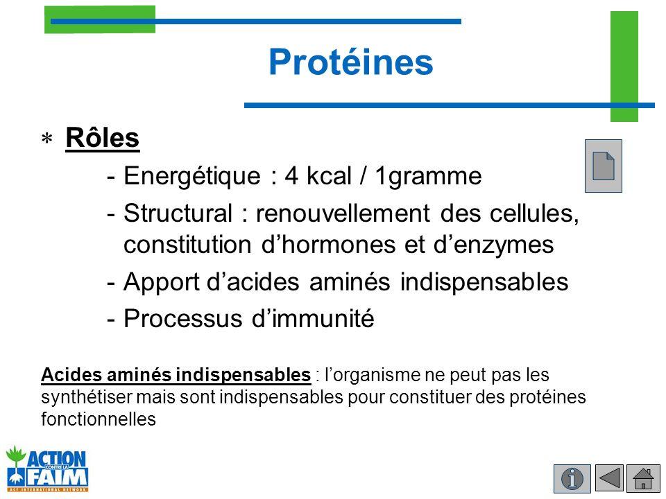 Protéines Rôles Energétique : 4 kcal / 1gramme
