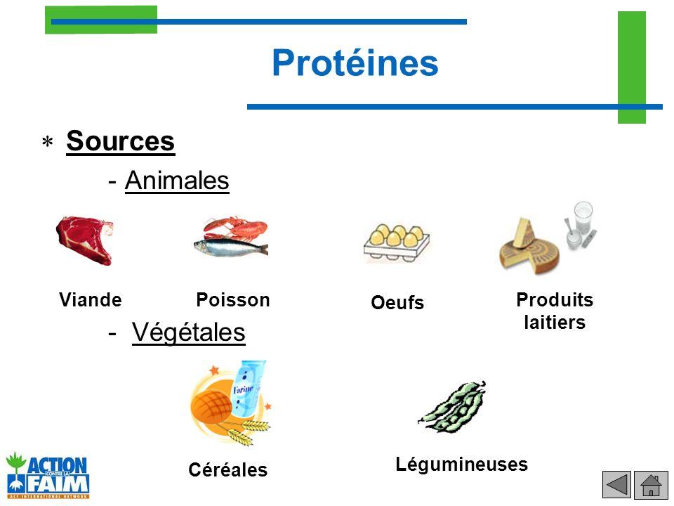 Protéines Sources Animales Végétales Viande Poisson Oeufs
