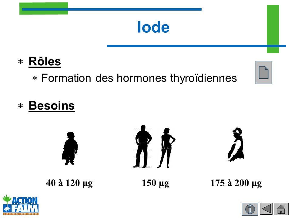 Iode Rôles Besoins Formation des hormones thyroïdiennes 40 à 120 μg