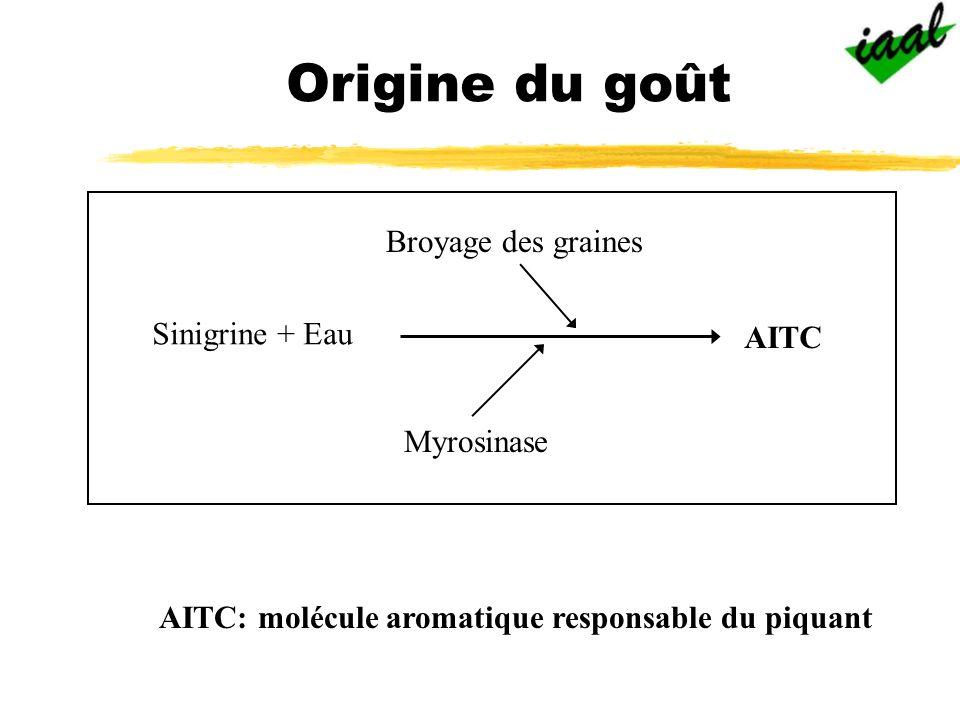 AITC: molécule aromatique responsable du piquant