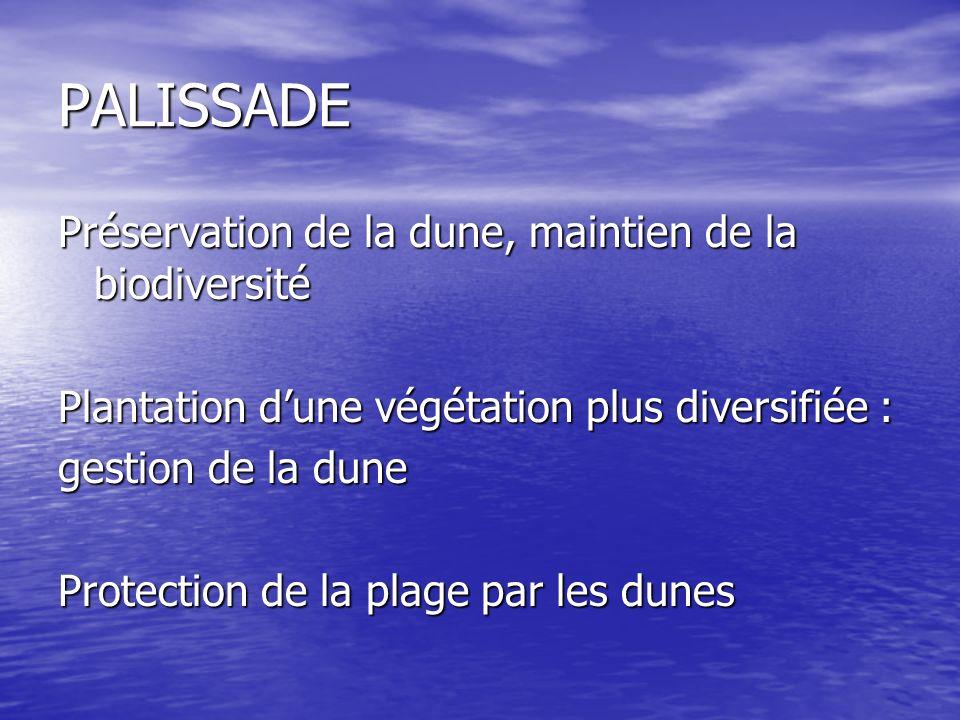 PALISSADE Préservation de la dune, maintien de la biodiversité