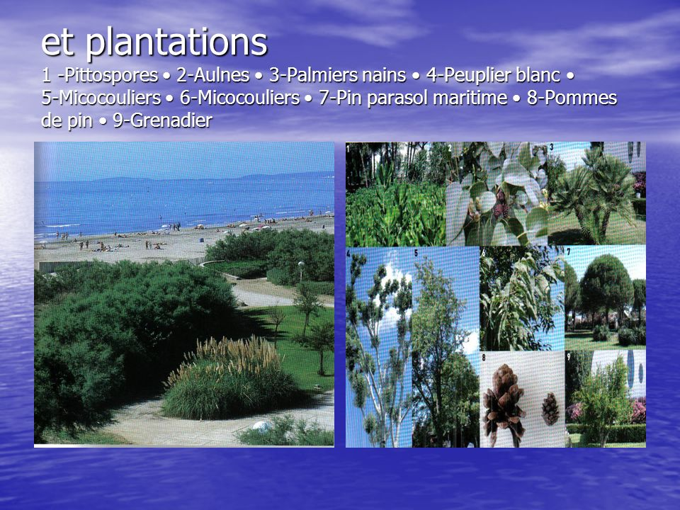 et plantations 1 -Pittospores • 2-Aulnes • 3-Palmiers nains • 4-Peuplier blanc • 5-Micocouliers • 6-Micocouliers • 7-Pin parasol maritime • 8-Pommes de pin • 9-Grenadier