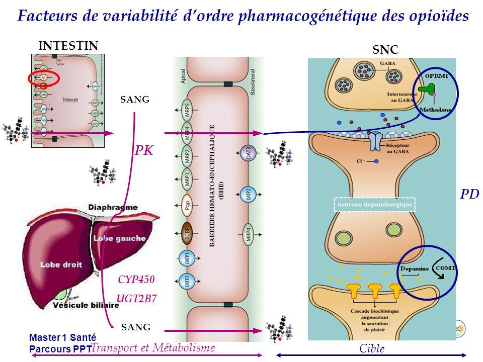 Facteurs de variabilité d'ordre pharmacogénétique des opioïdes