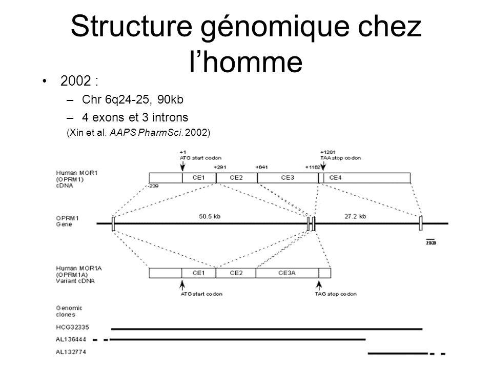 Structure génomique chez l'homme