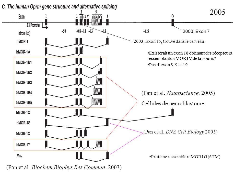 2005 (Pan et al. Neuroscience. 2005) Cellules de neuroblastome