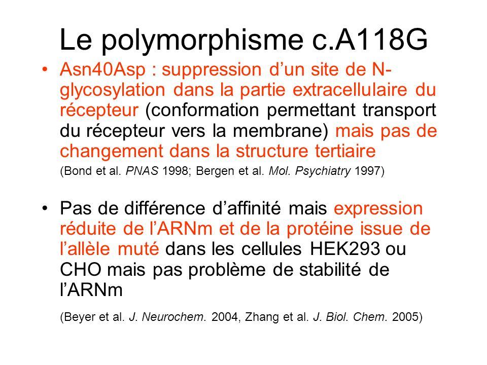 Le polymorphisme c.A118G