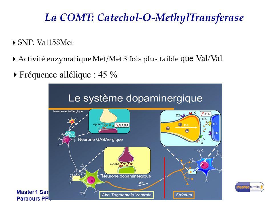 La COMT: Catechol-O-MethylTransferase