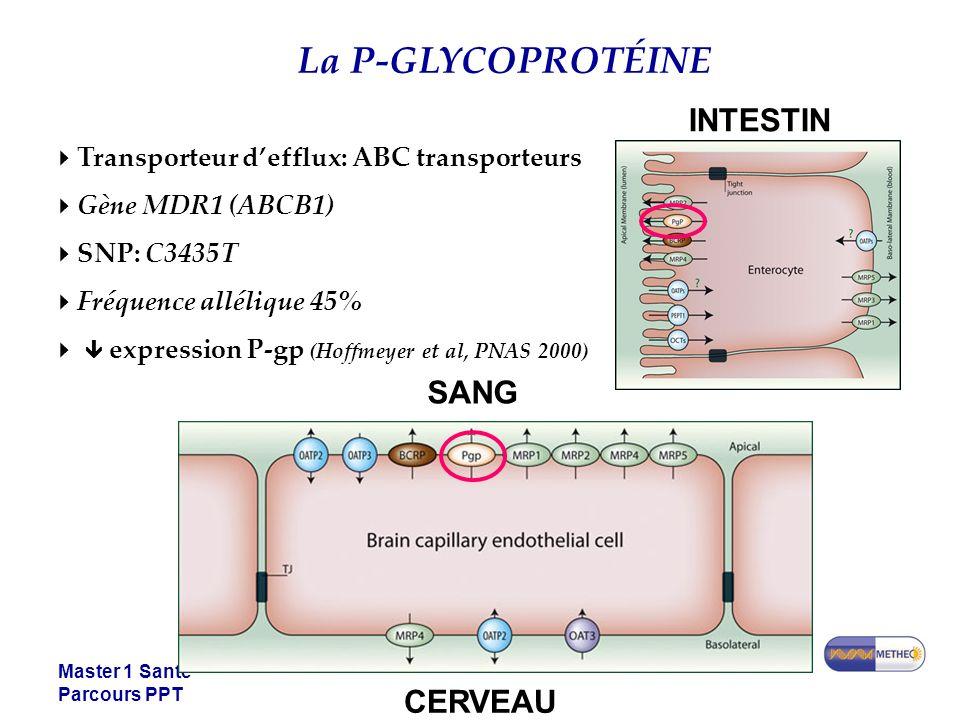 La P-GLYCOPROTÉINE INTESTIN SANG CERVEAU