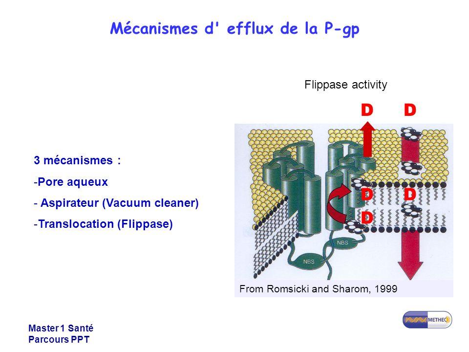 Mécanismes d efflux de la P-gp