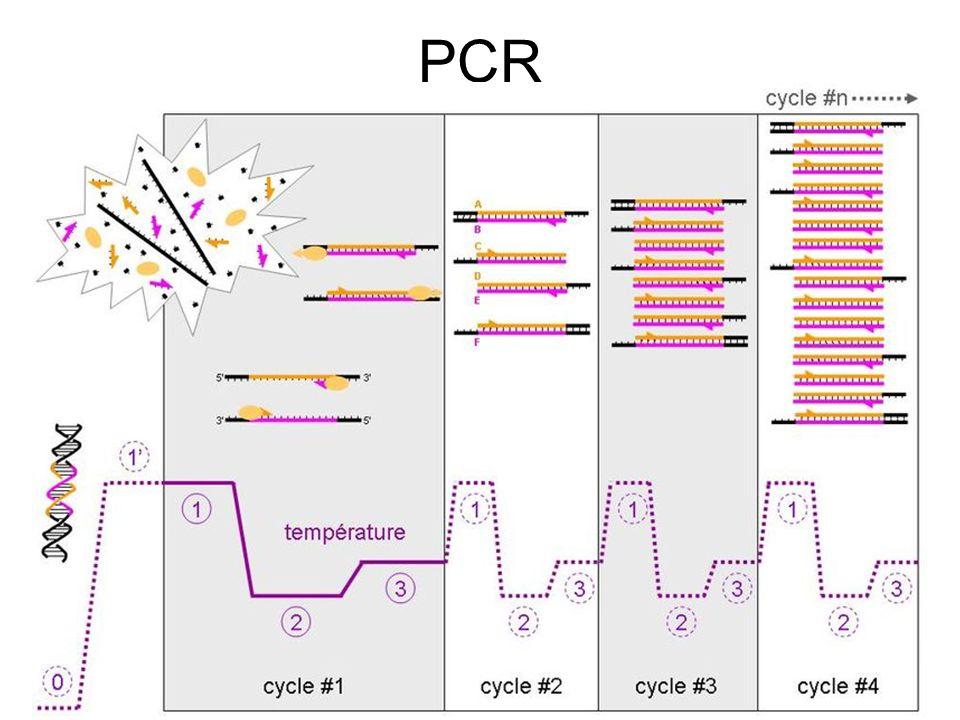 PCR Master 1 Santé Parcours PPT