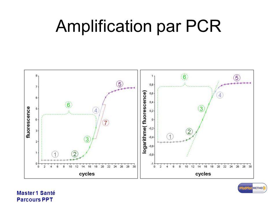 Amplification par PCR Master 1 Santé Parcours PPT