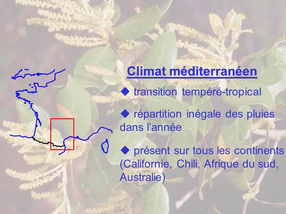 Climat méditerranéen transition tempéré-tropical