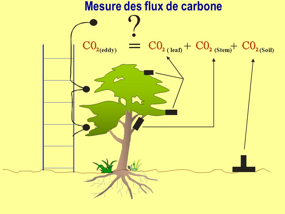 Mesure des flux de carbone
