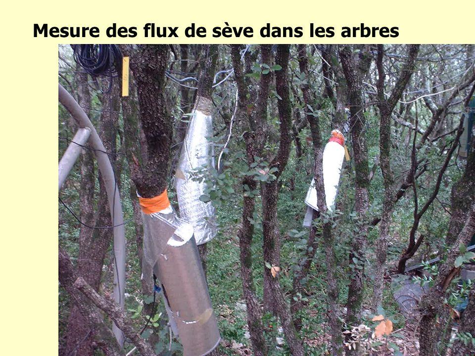 Mesure des flux de sève dans les arbres