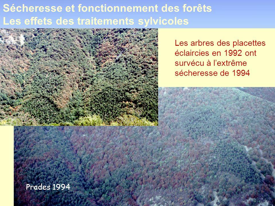 Sécheresse et fonctionnement des forêts