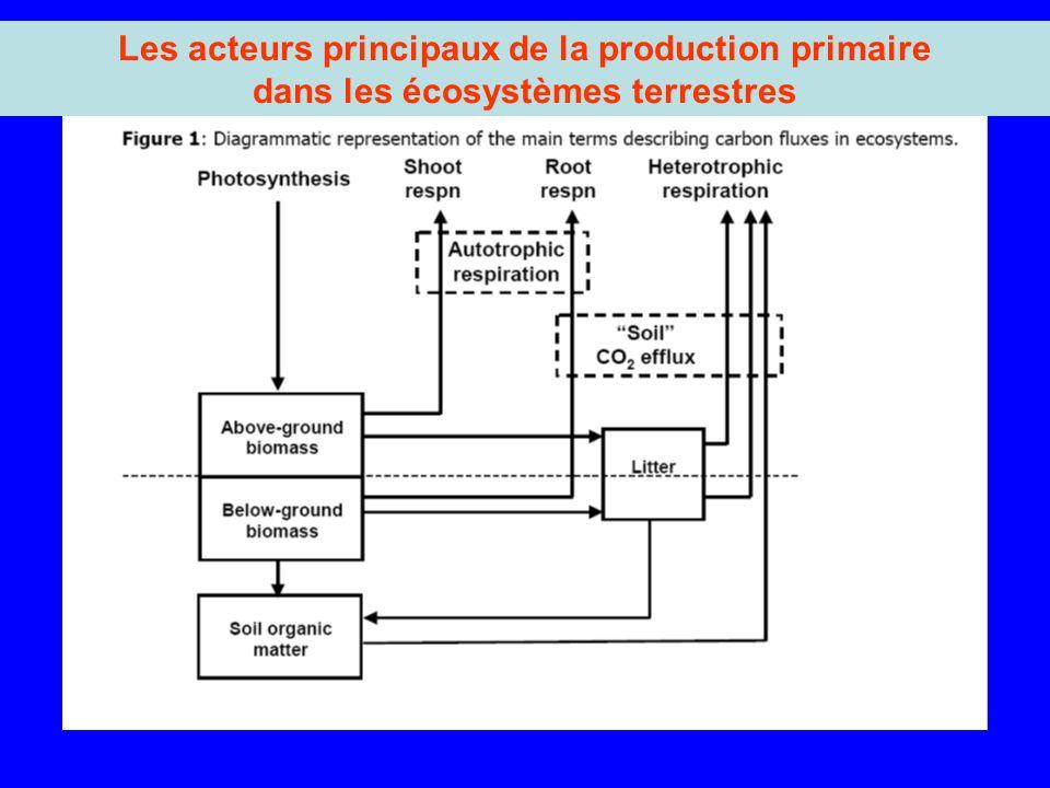 Les acteurs principaux de la production primaire