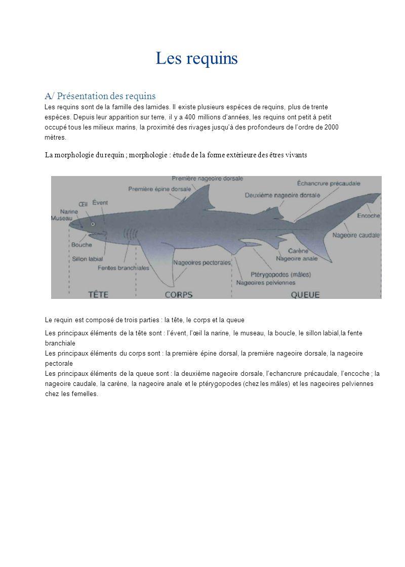 Les requins A/ Présentation des requins