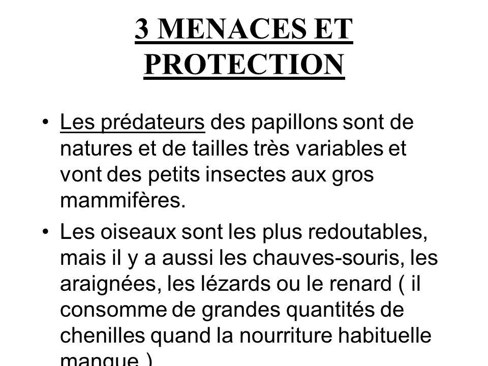 3 MENACES ET PROTECTION Les prédateurs des papillons sont de natures et de tailles très variables et vont des petits insectes aux gros mammifères.